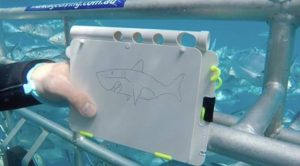 Phil drawing a Shaaark! cartoon in the cage at Neptune Islands