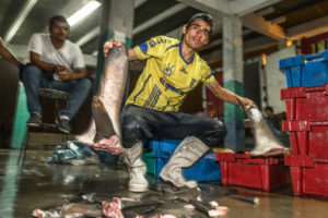 Fischer mit Haifischflossen